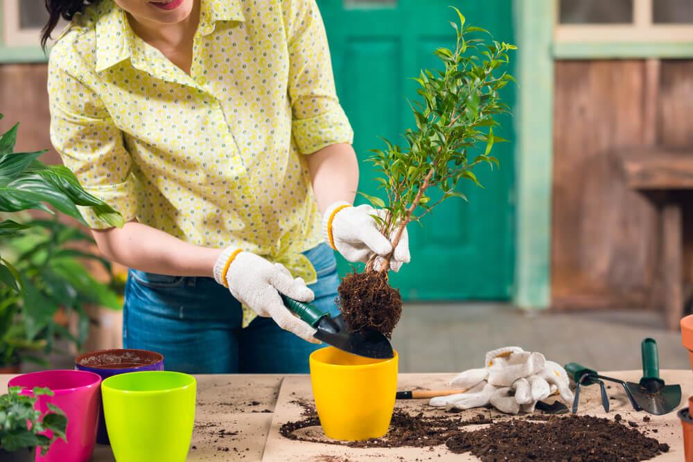 5 dicas incríveis para cuidar bem de um jardim pequeno