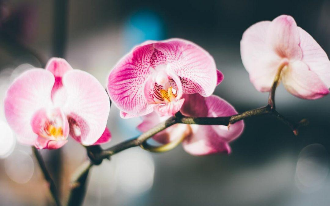 Flores de inverno: como manter seu jardim florido nesta época do ano