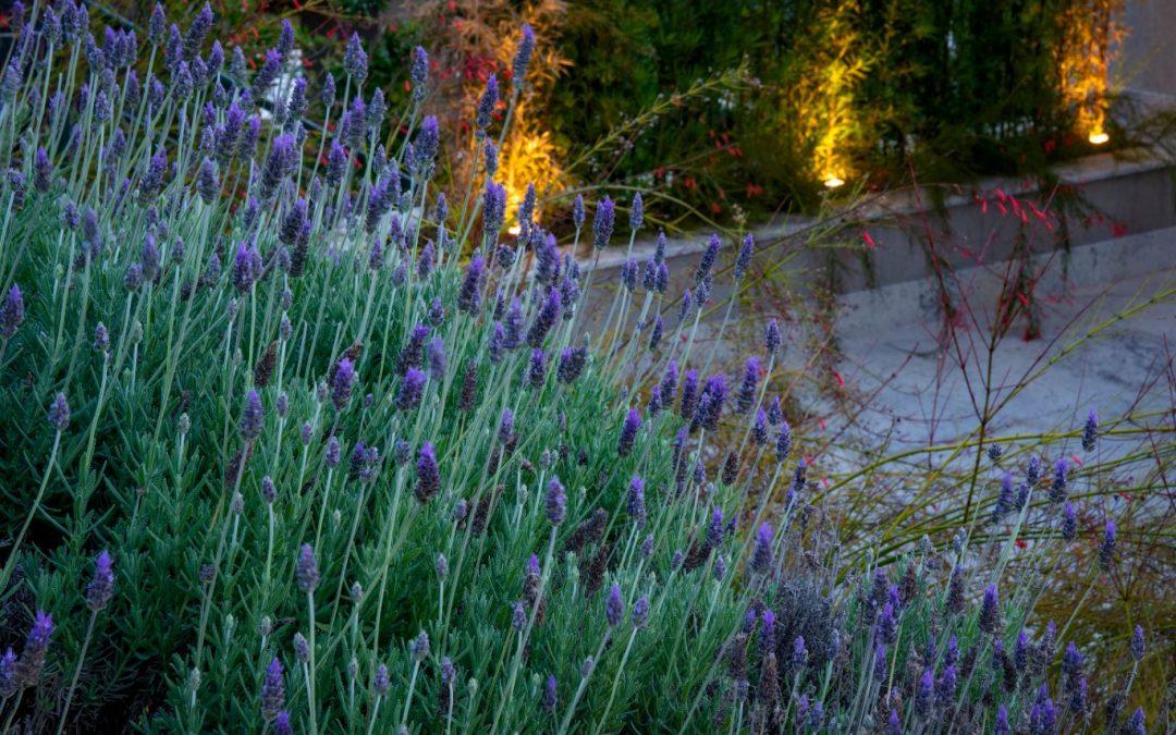 Saiba quais são as principais plantas aromáticas e como escolhê-las