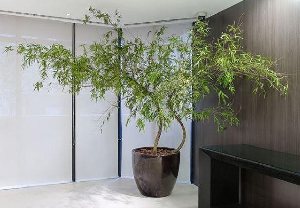 Por que as plantas preservadas são uma boa opção para sua casa?
