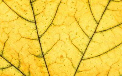 Plantas com folhas amareladas: descubra aqui o que fazer!